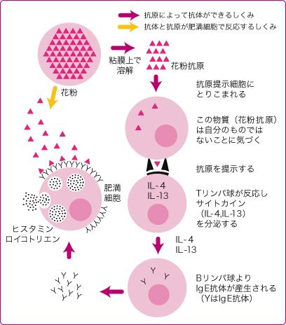 花粉の仕組み